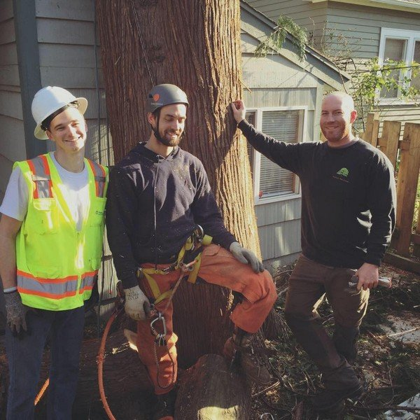 Affordable-Tree-Service-Kent-WA