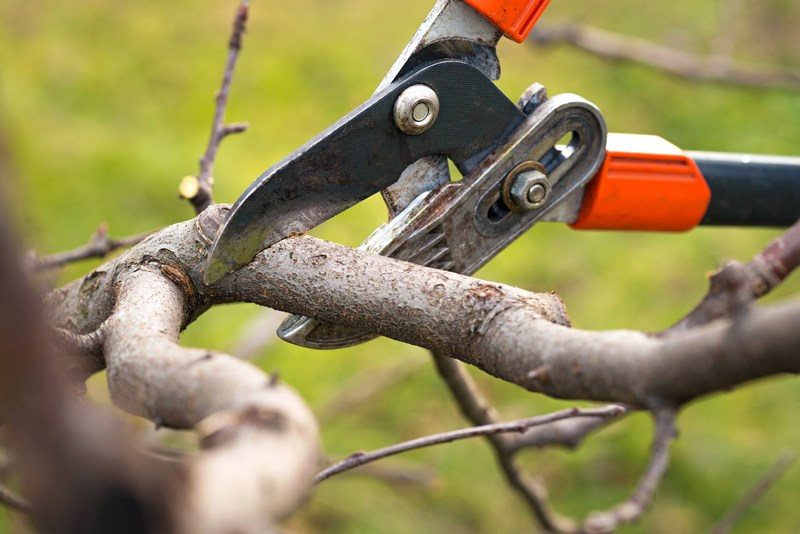 Fruit-Tree-Pruning-Tukwila-WA