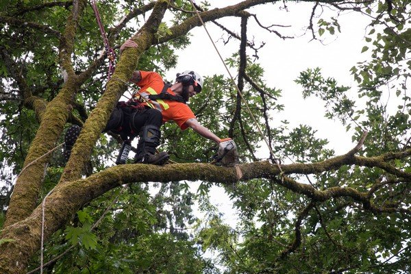 Tree-Cutting-Service-Kent-WA