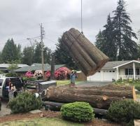 tree-removal-company-maple-valley-wa