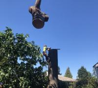 tree-removal-service-issaquah-wa