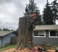 tree-removal-service-maple-valley-wa