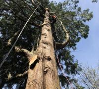 tree-removal-service-south-king-county-wa